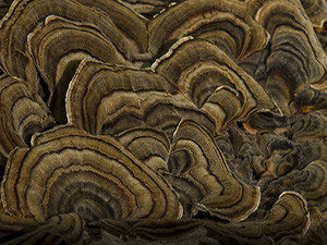 Blog_Swamp Ears_Close-up_2015_10_11_untitled_1426